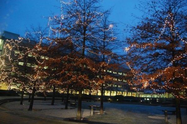 Tree Fairy Lights